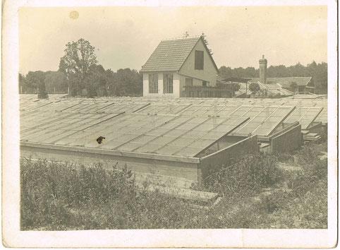 Frühbeete, ca. 1930