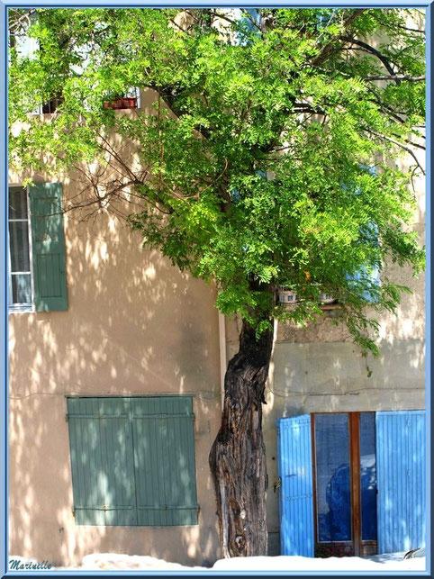 Maison et son acacia dans le village de Cucuron, Lubéron (84)