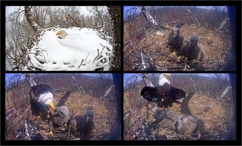 Screenshots der Livewebcam Hanover IPVS Inc.