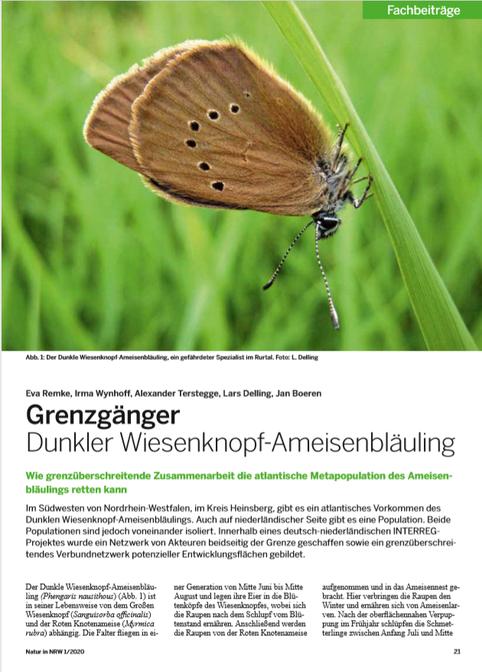 Natur in NRW 2020 - Artikel über den Ameisenbläuling in Heinsberg