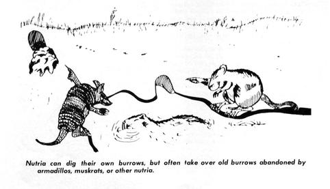 Nutria belegen Höhlen anderer Tiere
