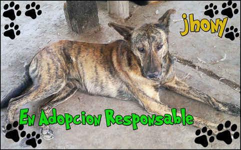 johnny en adopcion