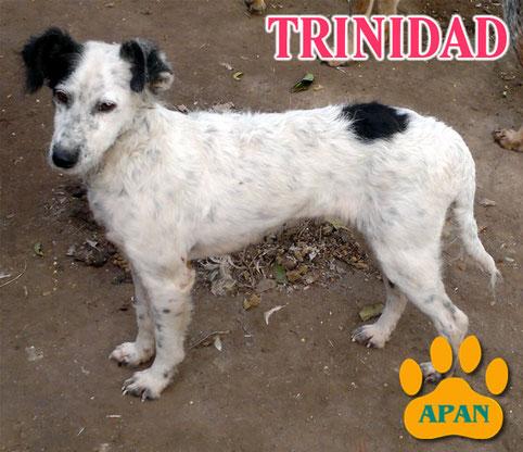 trinidad en adopcion