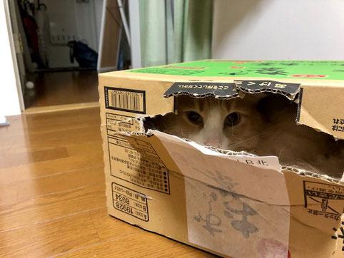 写真は猫だが、亥亥年になりますように。