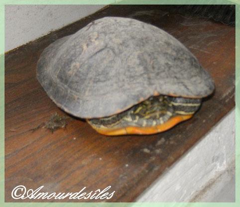 BAYOU, sur une des marches de la cuisine...Surprise du Lundi 26 avril 2010!