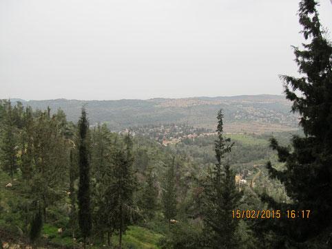Вид на Иерусалимский лес