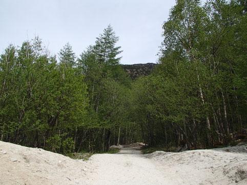 新緑と白砂