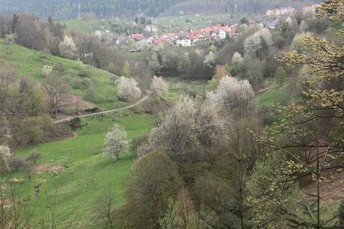beim Abstieg ins Igelbachtal sehen wir zurück nach Loffenau (G. Franke)