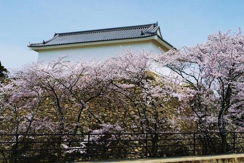 H,25,4,1,  10:30 頃         「桜満開の多門櫓」