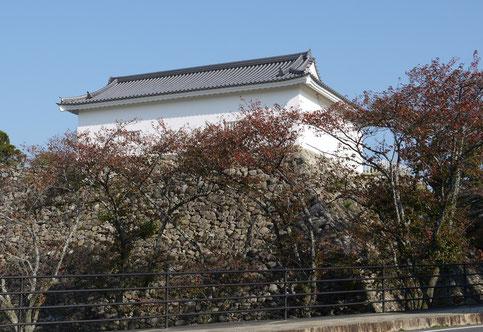 H,25,11,05,  9:00 頃    「桜の紅葉」