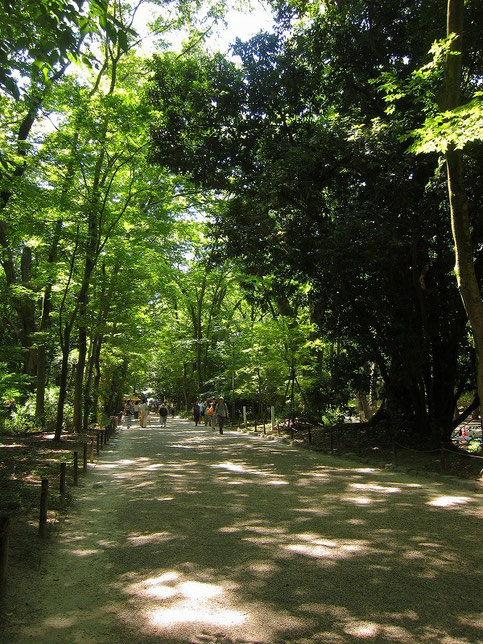 糺の森に入ると少し涼しくなるのを感じます。木漏れ日が本当に美しい。