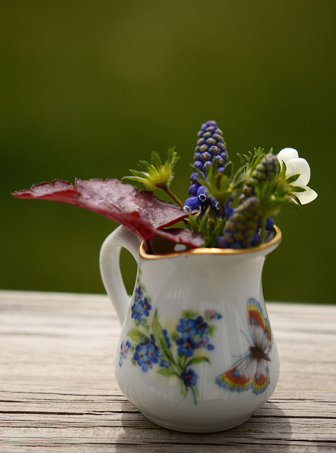muscari and heuchera in vintage creamer for in a vase on monday