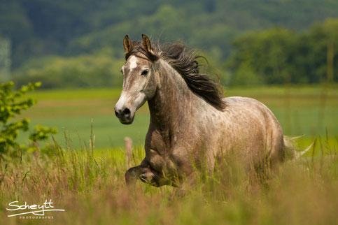 Fotoshooting Pferd NRW