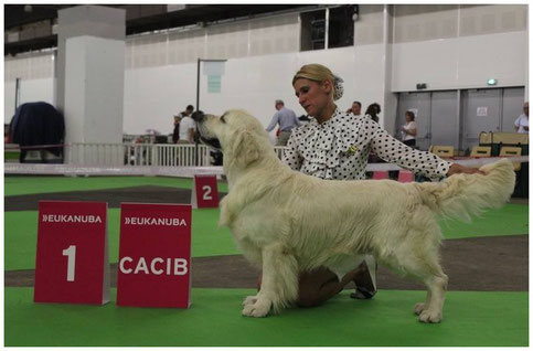 Multi CH.Butterfl'Highland Give Me The Moon ,1er exc classe Champion CACIB