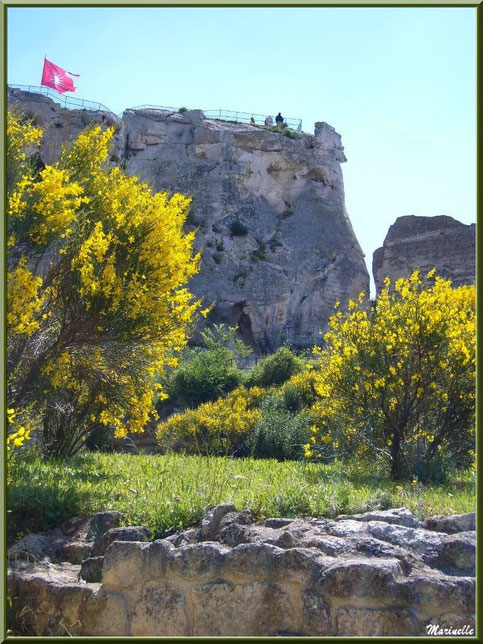 Vestiges du château derrière les genêts en fleurs, Château des Baux-de-Provence, Alpilles (13)
