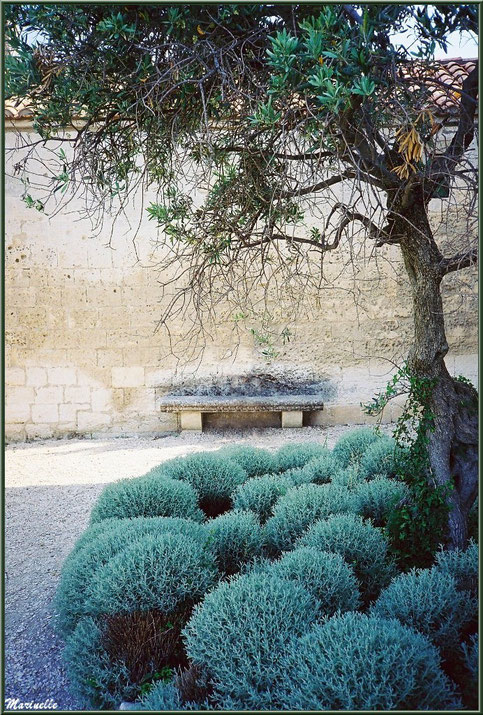 Placette aux lavandes et olivier avec banc de pierre contre Chapelle Saint-Blaise, Château des Baux-de-Provence, Alpilles (13)