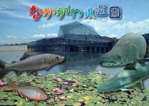 コラボ大宮・デートスポット栃木編「なかがわ水遊園」写真