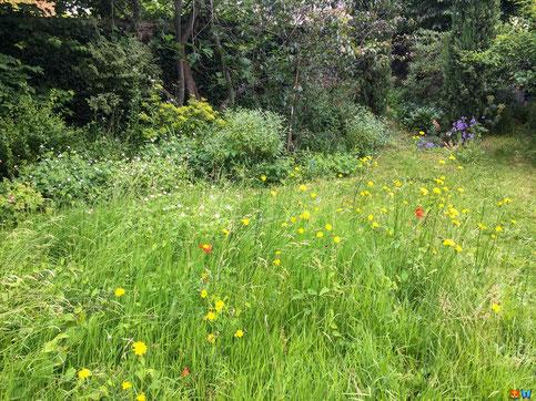 Ma pelouse au naturel ! - Fontenay sous bois