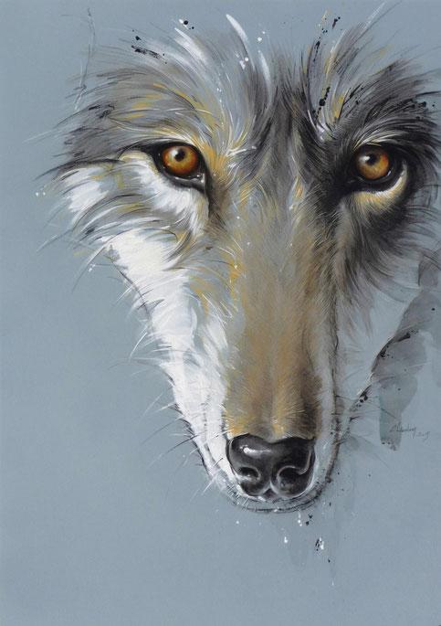 Dessin loup , illustration animalière