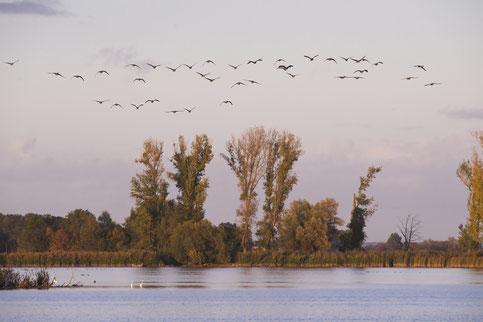 (c) Heike Dahl  Familien Kinder Oderland Ausflufstipps Vogelwanderungen Vogelschutzgebiet Oderbruch-blog.de