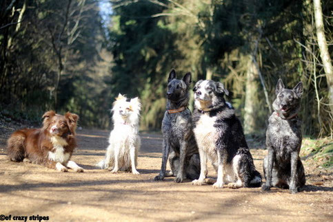 v.l.n.r.Haven,Tessy, Flama, Susi und Amanda