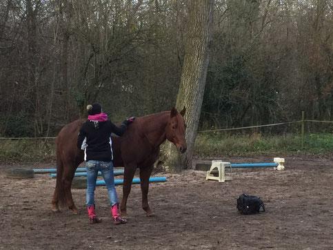 Gwhiz im smart Quarter Horse Hengst - Spook - Roxxter mit Therapeutin Ines Werner