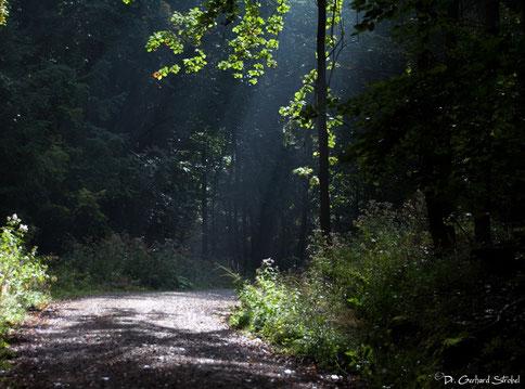 Morgenstimmung im Wald [© Foto: Dr. Gerhard Strobel]