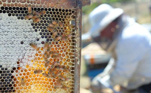 Apiculteur et ses abeilles en Nouvelle-Zélande