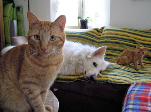 Alternative Behandlungsformen Tierheilpraxis Frieden
