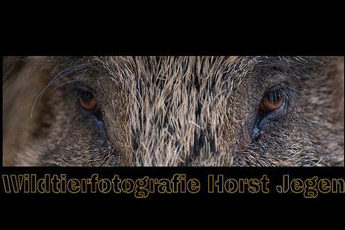 Horst Jegen Wildtierfotografie