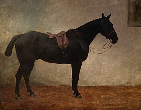 Margaret Collyer, Portrait of a Dark Bay Horse 1912