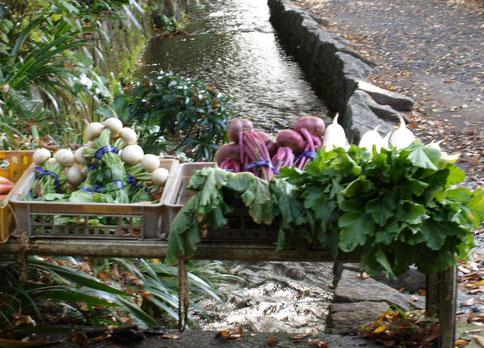 ●地元の採れたて野菜の直売所