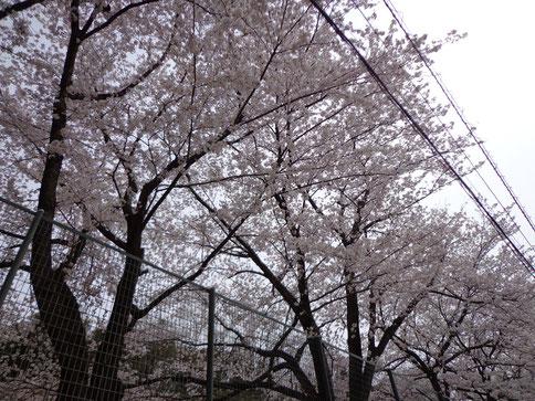 松戸整体・カイロブログ