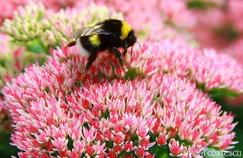 bee relax flower pink yellow green