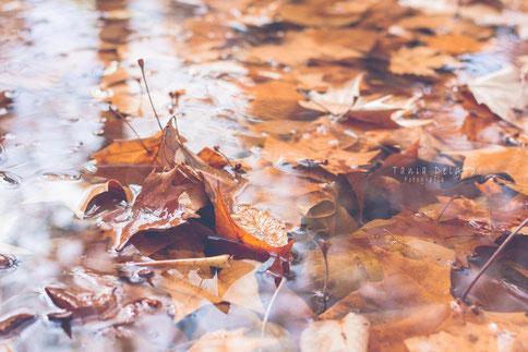 fotografia, naturaleza, aranjuez, hojas, otoño