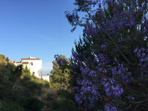 Villa Gandia Hills