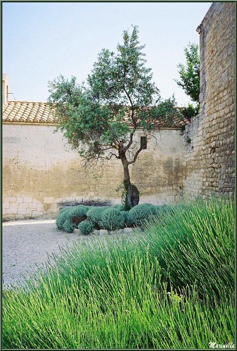 Placette aux lavandes et olivier contre Chapelle Saint-Blaise, Château des Baux-de-Provence, Alpilles (13)