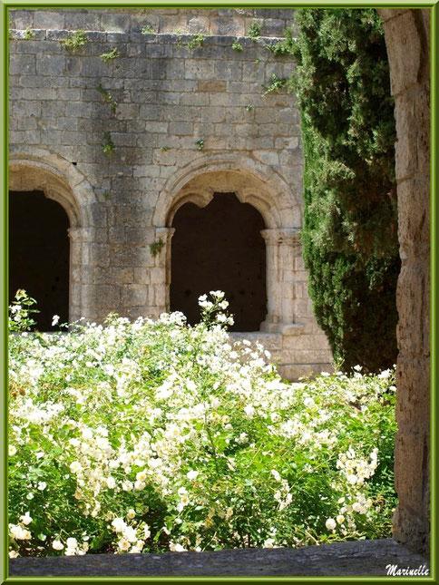 Vue sur le jardin intérieur du cloître de l'abbaye de Silvacane et sur deux baies du cloître avec vestiges de départ d'arcs ogivaux, Vallée de la Basse Durance (13)