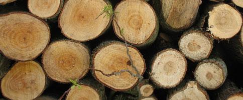 Brennholz lebt weiter