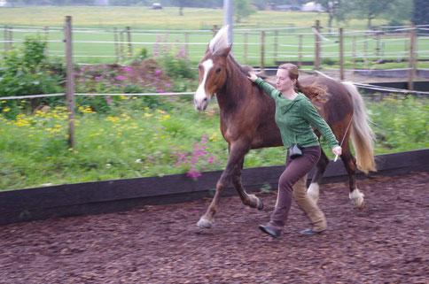 Freiarbeit mit Pferden / Liberty / Horsemanship / Pferdeliebe