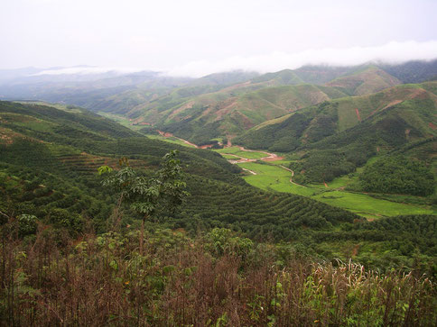This landscape in Yunnan that has been converted to rubber is located in a sub-optimal environment with respect to cold stress.