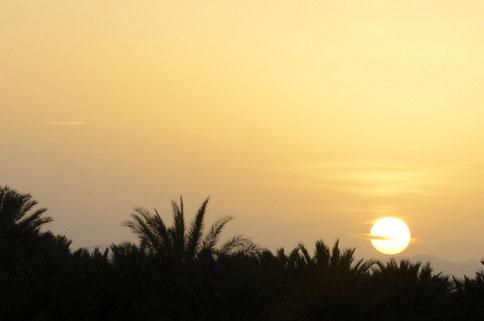 Sonnenuntergang hinter Palmen und dann ab in die Wüste