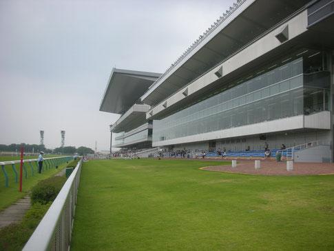 新潟競馬場,直線前の芝シート