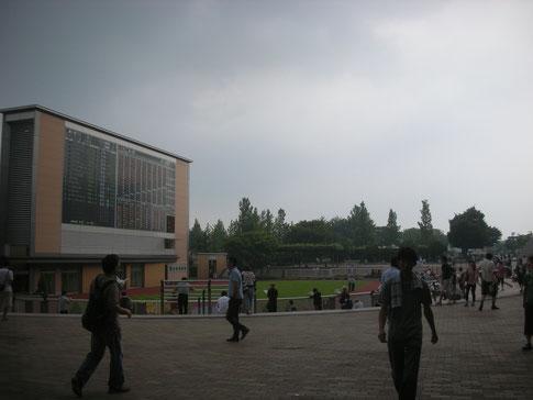 新潟競馬場,パドック