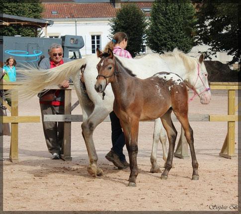 Daya d'Edel au chevaux du monde a 4mois