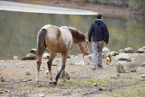 elevage de chevaux deux sevres