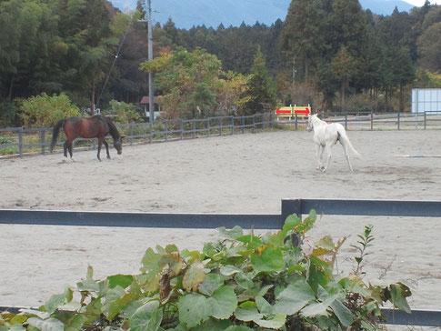 馬にとって自由で楽しい放牧~