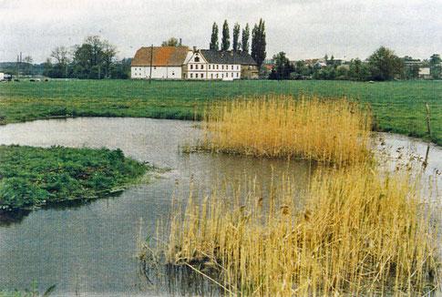 Gemeinde Wyhra im Vordergrund Reste einer slawischen Wasserburg, im Hintergrund das Gemeindeamt.