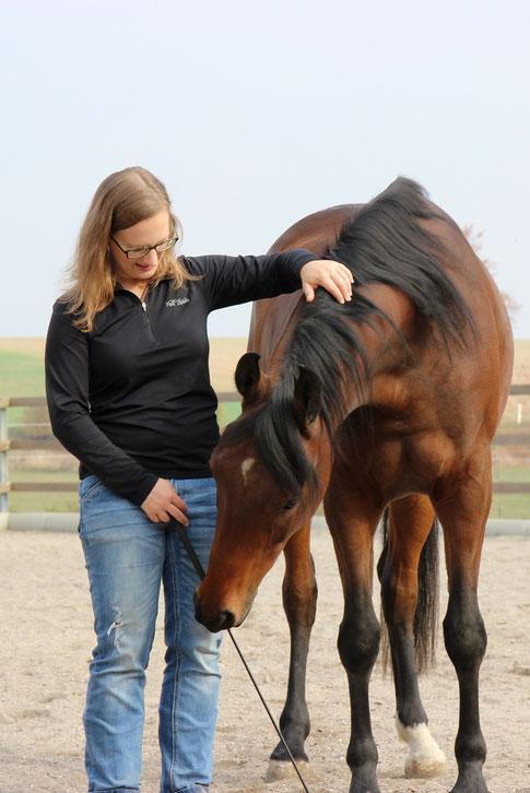 Pferdetraining, Horsemanship, Persönlichkeitsentwicklung mit Pferden
