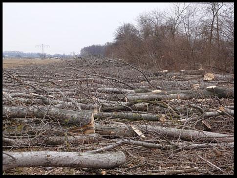 Abholzung Falkenrehde